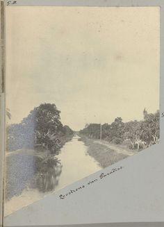 Loostrens van Paradise, possibly Gomez Burke, 1891