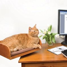 Desktop Cat Seat- because we all know, I AM the crazy cat lady :-) Crazy Cat Lady, Crazy Cats, I Love Cats, Cute Cats, Adorable Kittens, Gato Animal, Gadgets, Gatos Cats, Here Kitty Kitty