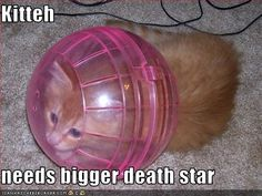 Kitteh Needs a Bigger Death Star
