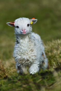 Adorable Baby Animals of 2012