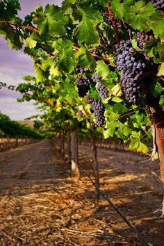 Travel: Barossa valley in South Australia
