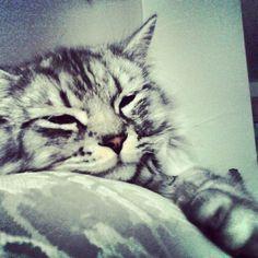 Sleepy boy :)