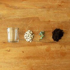 glass + stone + succulent + soil = terrarium