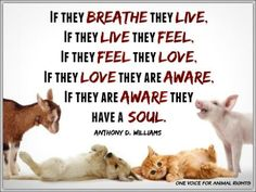 Animals have a soul.
