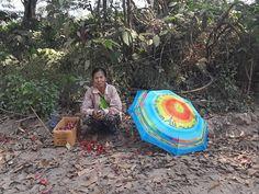 Parapluie en Asie