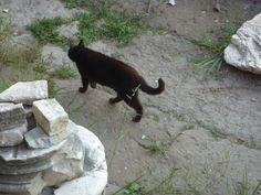 Cat Sanctuary in Rome - Largo Argentina