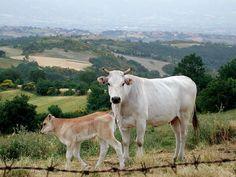 Toscana: #Fiera del #bestiame e dell'agricoltura a Calenzano (link: http://ift.tt/1P2gmzs )