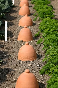 love the cloches