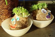 Homemade Chia pets. My kids are going to love these. Hopefully they can keep them alive better then I tend to plants?!