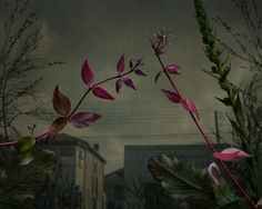 Botanical Inquiry 01
