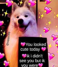 Gf Memes, Funny Video Memes, Relationship Memes, Cute Relationships, Wholesome Pictures, Pick Up Lines Cheesy, Funny Valentines Cards, I Need Love, Flirty Quotes