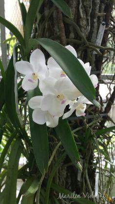 Orquídea- Jardim Botânico- Rio de Janeiro- Foto: Marília Vidigal Carneiro