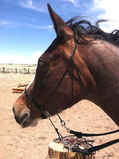 Paracord Bitless Bridle Cross Jaw by SimpleLoops on Etsy, $15.00