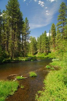 Metolius River from Smiling River Campground along the Metolius River Trail.- 30 Best Hikes Near Bend, Oregon Central Oregon, Bend, Oregon Trail, Portland Oregon, Viaje A Oregon, Oregon Forest, Oregon Nature, Oregon Landscape, Lakes