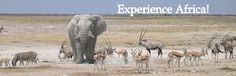 Few places has the wildlife diversity such as the Etosha National Park in Namibia. Will always be my second home! Private Safari, African Safari, Diversity, National Parks, To Go, Wildlife, Horses, Adventure, Vacation
