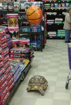saw this guy walking around a pet store enjoying his day