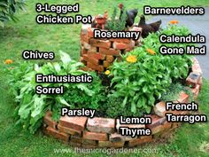 A herb spiral with a variety of herbs suited to different positions - dry & sunny at the top and moist & wet at the bottom.   http://themicrogardener.com/how-to-plant-out-a-herb-garden/