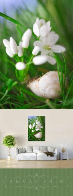Canvas print of a macro photograph of a snail shell in a meadow with white flowers under pouring rain. A dreamy and fresh image of nature in spring. #fresh #spring #greenery #beauty in nature #snail