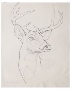 Animal Sketches Easy, Art Drawings Sketches Simple, Pencil Art Drawings, Cute Drawings, Easy Animal Drawings, Hipster Drawings, Drawing Ideas, Drawing Step, Sketches Of Animals
