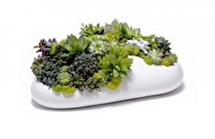 Plant the Future Mini Garden by Paloma Teppa