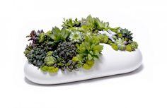 Plant the Future Mini Garden by Paloma Teppa