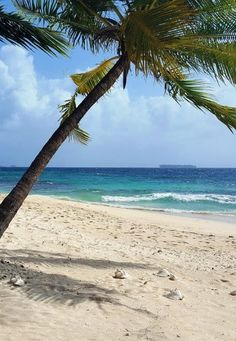 The perfect place for a digital detox- on the Caribbean Coast of Panama  Relaxing at the Beach in the San Blas Islands https://www.compassandfork.com/relaxing-at-the-beach-in-the-san-blas-islands/