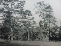Darstellung aus einem Werk von Hermann Löns Snow, Painting, Outdoor, Art, Plants, Outdoors, Art Background, Painting Art, Kunst
