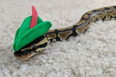 38 best my ball python boop noodle images ball python cute