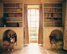 Dog-bed book shelves.