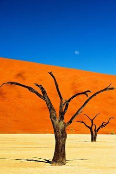 世界最古の砂漠に現れた神秘の絶景『デッドフレイ