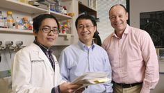 UT Southwestern Medical Center scientists report the first successful blocking of tumor development in a genetic mouse model of an incurable human cancer.