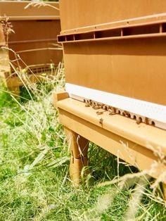 #castorama #inspiration #decoration #ideedeco #tendancedeco #jardin #exterieur #amenagement #salondejardin #tapis #plantes #vegetal #fauteuil #tablebasse #piscine #terrasse
