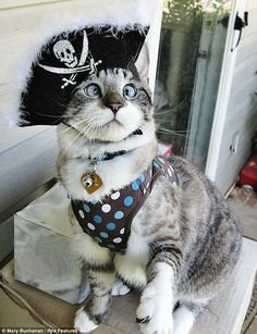 Simon's Cat Asks. Spangles, the cross eyed cat - Simon's Cat Cute Cats, Funny Cats, Funny Animals, Cute Animals, Hilarious Jokes, Funny Stuff, Costume Chat, Pet Costumes, Funny Animal Pictures