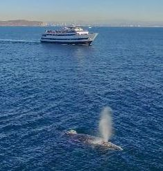 See Whales on San Diego Whale Watching Tours