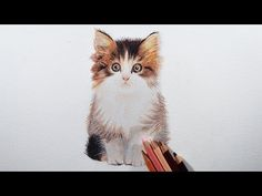 In this tutorial i am trying to teach you how to draw a kitten easily with colored pencils. This drawing was done under 1 hour. i have used prismacolor penci...
