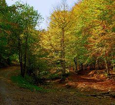 La Selva de Irati – Tesoro Natural en Navarra
