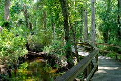 Places where you can walk an easy mile or less, ideal for a quick reconnect with nature during your busy day. Many of these are interpretive, too, making them great for youngsters or people unfamiliar with Florida habitats and history.