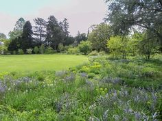 A summer walk at Hermannshof—a garden celebrating the beauty of plants and their habitats — View from Federal Twist Woodland Plants, Foliage Plants, Salvia, Day Lilies, Drought Tolerant, Ecology, Botanical Gardens, Evergreen, Habitats