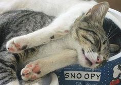18 Hilarious Pictures of Cats Sleeping Awkwardly