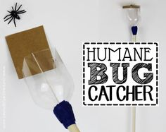 How To Make a Humane Bug Catcher