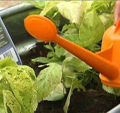 Tips on watering plants from garden expert Mark Gibbs http://www.myfoxaustin.com/clip/10376098/your-garden