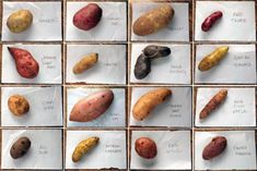 Types of Potatoes: 3 Main Varieties + What Recipes They're Best For Sweet Potato Varieties, Peruvian Potatoes, Types Of Potatoes, Potato Types, Fingerling Potatoes, Cooking Tips, Cooking Recipes, Lard, Gourmet