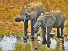 Students study wildlife in Swaziland