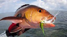 Sweet flats snapper #fishing #wickedcatch