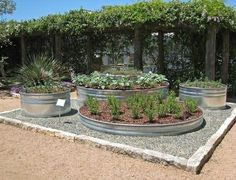 galvanized tub used as raised gardening beds by daisy