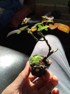 Micro bonsai!!!