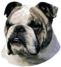 Bulldog Dog Portrait Counted Cross Stitch Pattern Boston Needleworks,http://www.amazon.com/dp/B00FOVWHYC/ref=cm_sw_r_pi_dp_UAi4sb0CBS9XAQSZ