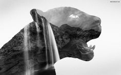 Double exposure black panther and a waterfall.  Powered by T4 Project