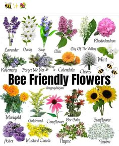 Bee Friendly Flowers, Bee Friendly Plants, Herb Companion Planting, Starting A Garden, Flower Farm, Flower Beds, Save The Bees, Lawn And Garden, Garden Tips