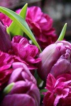 Tulpen.